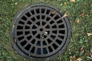 Sewer Repair and Tree Roots: Warning Signs and Treatment